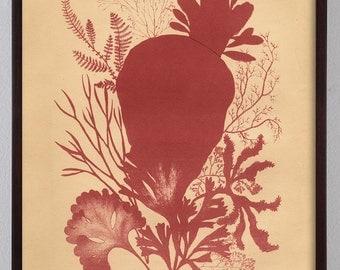 Seaweed Antique Print, Vintage Victorian Seaweed in Dark Red, Home Decor Art
