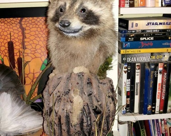 New raccoon mount