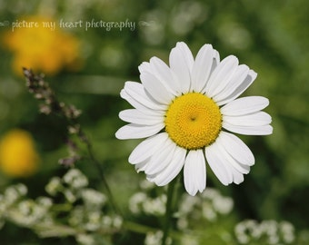 Adorable Mini Daisy Floral Art Print