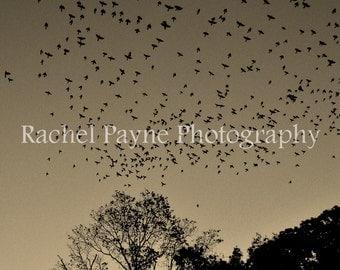 Flock - Original Photograph