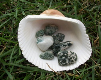Tree Agate Chipstones