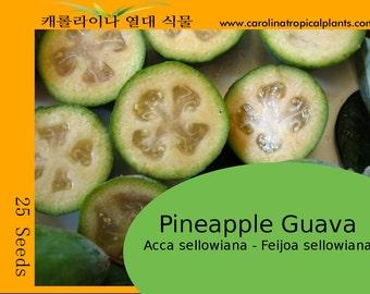 Pineapple Guava - Acca sellowiana - Feijoa sellowiana - 25 Seeds