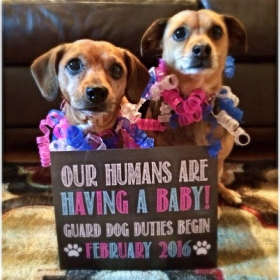 Our Humans Are Having A Baby! Printable Chalkboard Photo Prop / Digital File / Dog Baby Announcement / Guard Dog Duty