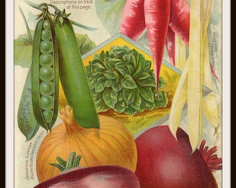 "Vintage Art Print Seven Grand Vegetables Seed Pack Catalog Ephemera,  Print Wall Decor, 8.5 x 11""  Unframed Printed Art Image"
