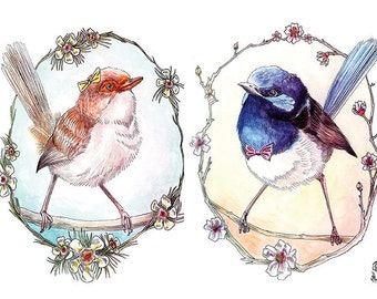 Mr and Mrs Fairy Wren Print