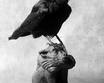 Taxidermy crow on a gargoyle