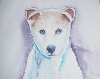 Watercolour painting of Siberian Husky puppy