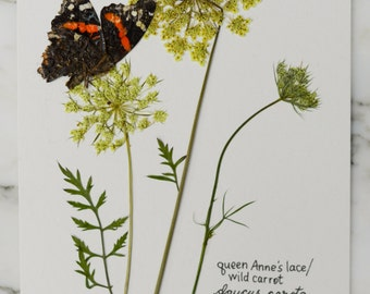 """Real pressed wild Queen Anne's Lace with butterfly, 5x7"""", pressed flowers perfect for framing"""