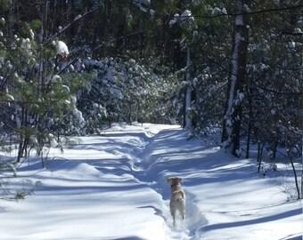 Fine Art Print, Winter,  Dog, Woods, Wall Decor, Home Decor