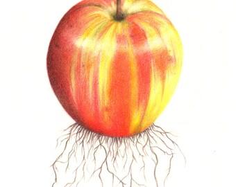 PRINT: Pomme de terre