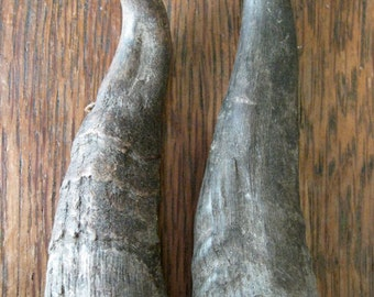 Real goat horns, natural, genuine; for mask making, folk or devil costumes, brown, Waldteufel, Perchten, Krampus, magick, ritual (2 pieces)