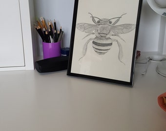 A4 Hand Drawn Teddy Bear Bee Print, Scientific Illustration, Entomology