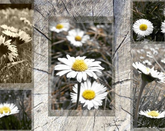 Picture photo collage Daisy in macro JPG file