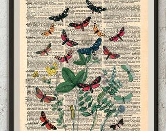 Bohemian Butterflies #1 dictionary art print on original paper page, book art print, home decor, wall art print, vintage illustration