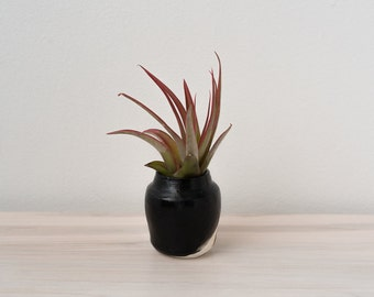 Mini Vase for Air Plant: made to order