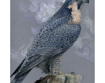 Athena Dreams - Peregrine Falcon Print - Wildlife Bird Art