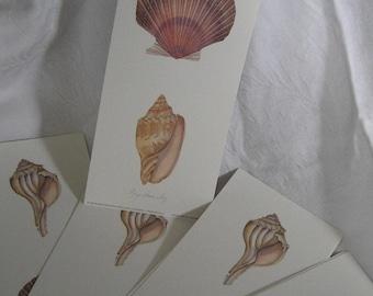 Set of 10 VINTAGE Litho Sea Shells Botanical Print to Frame or Collage
