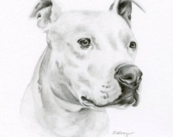 Custom Pencil Drawing, size 4 x 4 OR 5 x 5, Custom Pet Portrait, Custom Pet Drawing, Dog Art, Dog Portrait, Dog Pencil Drawing, Graphite