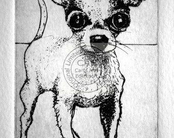 original copperplate etching of a chihuahua