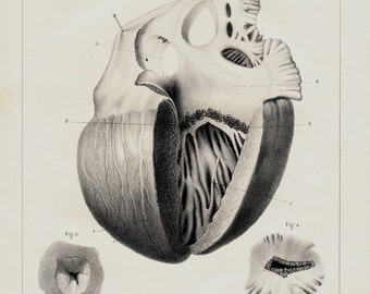 1842 Antique print of ANATOMY, heart print