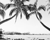 "Black And White Palm Tree Print, Palm Tree Decor, BW Decor, Beach Decor, Black and White Photography, Square Wall Art, ""The Bay BW"""