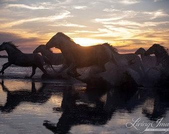 Camargue Horses Running at Sunset -  Fine Art Horse Photograph - Horse - Camargue
