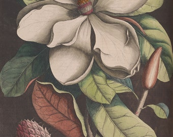 Magnolia Flower beautiful vintage illustration Digital Download