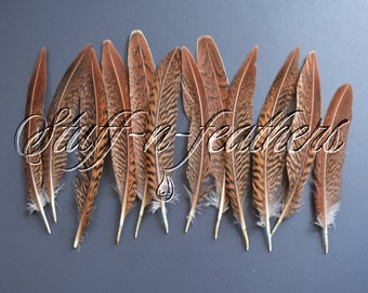 Golden pheasant feathers, natural brown loose feathers for millinery, DIY crafts, weddings, table setting / 4-6 in (10-15 cm) long / F179-4
