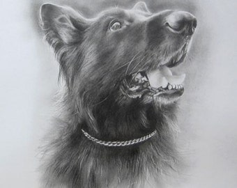 Custom 12 x 16 pencil drawing of your dog or cat, created by Ewa Gawlik. Made To Order.