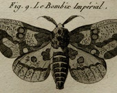 1789 Antique print of BUTTERFLIES, different species. Insects. Entomology. Silkmoths. Panckoucke Encyclopédie Engraving. 227 years old