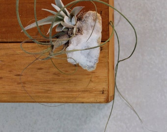 Geode Crystal Rock and Air Plant, Decor, Paperweight, Tillandsia