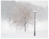 Winter park, Tree art, snow photography, Grey white wall art print, monochromatic nature art picture, 8x10, 11x14, 12x16 print, 16x20 prints
