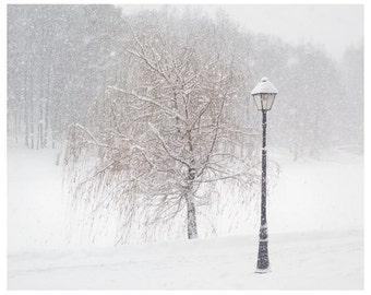 Tree art, snow photography, white wall art print, winter nature art picture, Winter landscape, 8x10, 11x14, 12x16 print, 16x20 prints
