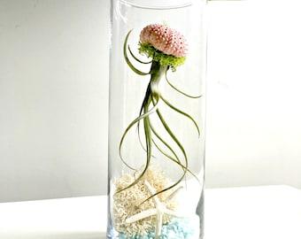 Under the sea terrarium- large glass vase Living decor DIY kit - gift for any occasion-  beach decor
