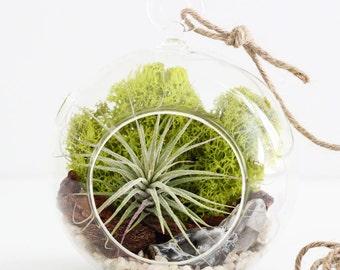 Air Plant Terrarium Kit with Geode and Quartz Crystal  - Choose Small or Teardrop Hanging Glass Terrarium