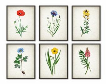 Wild Flower Art Print Set Of 6 - Vintage Flower Decor - Botanical Plant Decor - Home Decor - Kitchen Decor - Flower Wall Art - AB601
