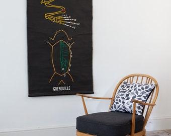 Dr Auzoux Vintage Biological poster (Grenouille - Frog)