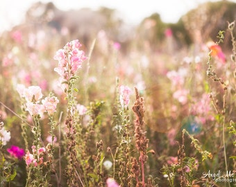 Soft pink flowers, pink wall art, field of flowers, pink bedroom, floral, nursery decor, cottage chic, fine art photography print,