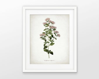 Oregano Print - Oregano Herb Plant Illustration - Antique Botanical Herb - Botanical Print - Single Print #1556 - INSTANT DOWNLOAD