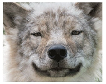 North American Gray Wolf Photography Limited Edition Fine Art Print
