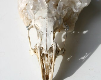 SALES - Orux - Rabbit skull necklace with crystal