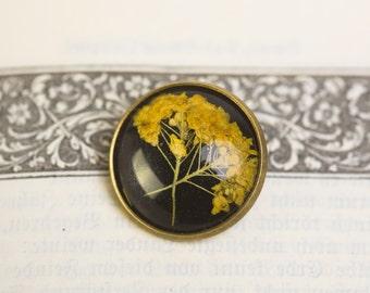 FELSENSTEINKRAUT - Brooch with real blossoms of Sweet Alyssum, Flower Jewelry, Real Dried Flowers Encased in Resin, Resin Jewelry