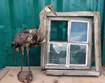 Grey Heron naturalized in the 70's cabinet of curiosities