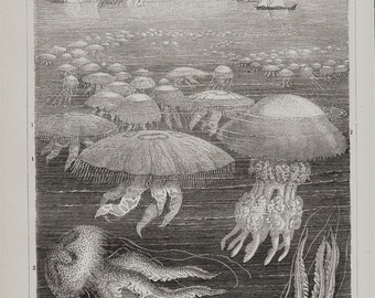 1889 Antique print of JELLYFISH, JELLYFISHES in the shore