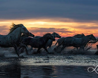 Midnight Sun Run - Fine Art Horse Photograph - Horses - Camargue - Fine Art Print