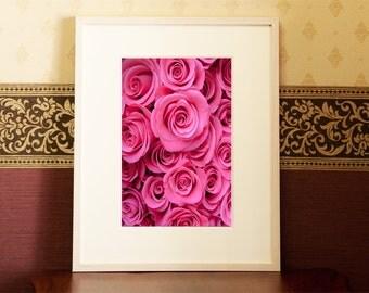 Rose / vivid pink