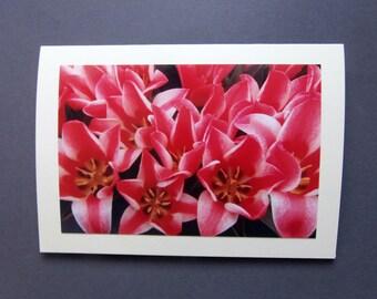 "Red Tulips Photo Card Size 7"" x 5"" (18cm x 12.5cm) Blank"