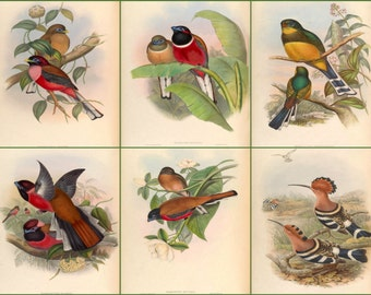 A Set of six bird prints restored from the 1800's
