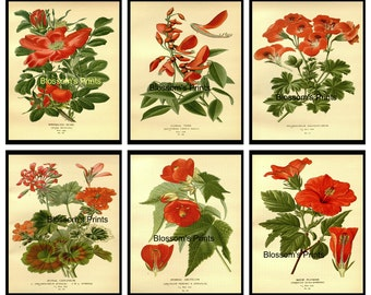 "Set of Six flowers from the 1800's Plates 6,10,29,3022,25 ( Prints are 8"" x 10 "")"