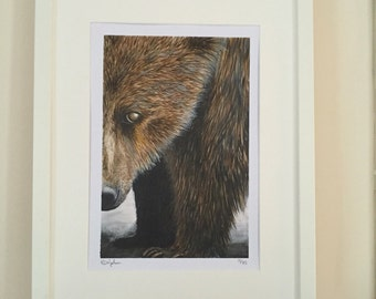 Brown Bear Watercolour painting. Limited edition sogned art print